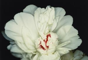 araki_fleur